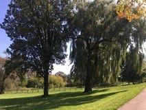 Gräsplan parkerar träd en pil Arkivbild