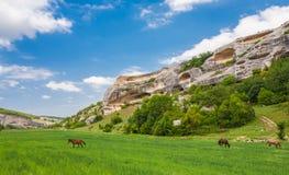 Gräsplan sätter in, berg och hästar Fotografering för Bildbyråer