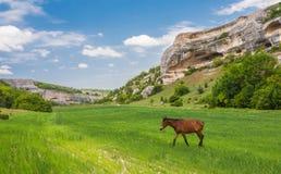 Gräsplan sätter in, berg och hästar Royaltyfri Fotografi