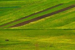 Gräsplan sätter in med grönt gräs royaltyfria bilder