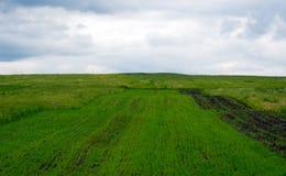 Gräsplan sätter in med grönt gräs arkivbild