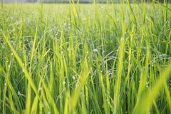 Gräsplan sätter in morgon med morgonljuset Royaltyfria Bilder