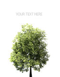 Gräsplan sätter in och den ensamma treen - landskap royaltyfri bild
