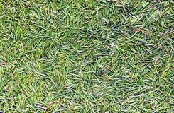 Gräsplan sörjer grov spikbakgrund royaltyfri foto