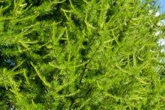 Gräsplan sörjer period för filialnärbildsommar royaltyfri fotografi