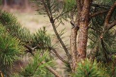Gräsplan sörjer skällfilialer stänger sig upp royaltyfri bild