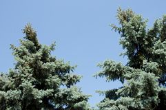 Gräsplan sörjer trädöverkanten pÃ¥ blÃ¥ himmel, kopieringsutrymme natur- och miljöconept med inget fotografering för bildbyråer