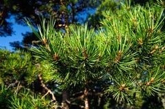 Gräsplan sörjer träd arkivfoton