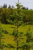 Gräsplan sörjer trädet med gräs- fältbakgrund Arkivbild