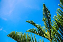 Gräsplan sörjer trädfilialen med bakgrund för blå himmel Royaltyfri Bild