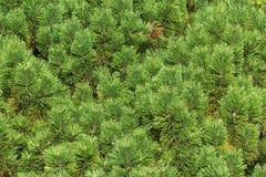 Gräsplan sörjer treen förgrena sig Arkivfoton