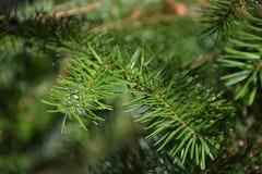 Gräsplan sörjer visarbakgrund Royaltyfria Bilder