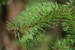 Gräsplan sörjer visarbakgrund Royaltyfri Foto