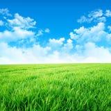 Gräsplan som en äng i solen Royaltyfri Illustrationer