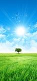 Gräsplan som en äng i solen Royaltyfri Bild