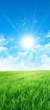 Gräsplan som en äng i solen Fotografering för Bildbyråer