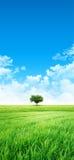 Gräsplan som en äng i solen Arkivbild