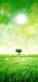 Gräsplan som en äng i solen Royaltyfri Fotografi