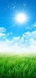 Gräsplan som en äng i solen Arkivfoto