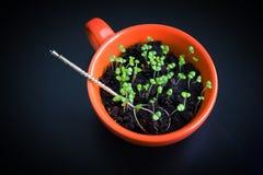 Gräsplan spirar i orange kopp med skeden Vegetarisk mat Royaltyfri Foto