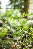 Gräsplan spricker ut naturvändkretsen Arkivfoton