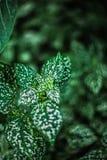 Gräsplan spricker ut naturvändkretsen Fotografering för Bildbyråer