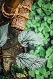 Gräsplan spricker ut naturvändkretsen Royaltyfria Foton