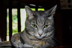 Gräsplan synar katten Royaltyfri Foto
