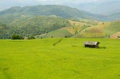 Gräsplan terrasserad risfält Arkivfoton