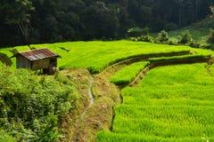Gräsplan terrasserad risfält Fotografering för Bildbyråer