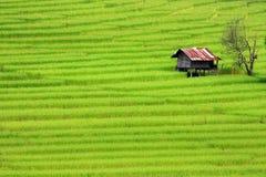 Gräsplan terrasserad risfält Arkivfoto