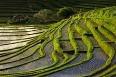 Gräsplan terrasserad risfält i Bali, Indonesien Royaltyfria Bilder