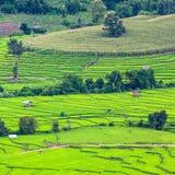 Gräsplan terrasserad risfält i Chiangmai Arkivfoto