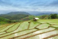 Gräsplan terrasserad risfält i PA Pong Pieng, Chiang Mai, Thailand arkivfoton