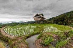 Gräsplan terrasserad risfält i PA Pong Pieng, Mae Chaem, Chiang Mai, Thailand royaltyfri bild