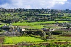 Gräsplan terrasserade ängar, Malta Arkivbilder