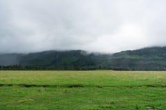 Gräsplan under misten Royaltyfria Foton