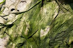 Gräsplan växtbakgrund Arkivfoton