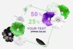 Gräsplan vit, violetblommor, svart kronblad på cirkelbakgrund Malva Rudbeckiablommor skärm för efterföljd för bakgrundsdatormode Royaltyfri Fotografi