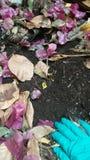 Gräsplanen av handen på den svarta jorden royaltyfria bilder