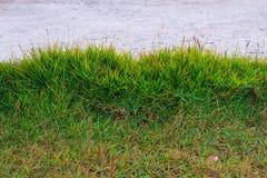 Gräsplanen för gräsgräsmattabakgrund Royaltyfria Bilder