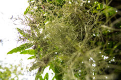 Gräsplanen rotar trädet Arkivfoton
