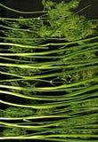 gräsplaner Arkivbild