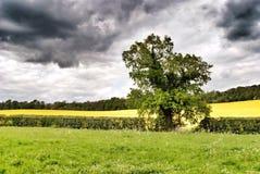Gräsplaner och gulingar Royaltyfri Fotografi