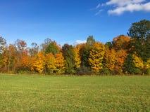 Gräsplanfält av hösten Arkivbild