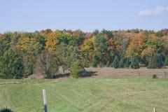 Gräsplanfält av nedgångar Fotografering för Bildbyråer
