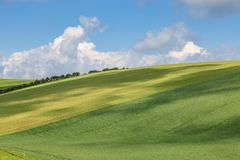 Gräsplanfält i den Sussex bygden Fotografering för Bildbyråer