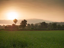 Gräsplanfält med solen på den guld- gryningen Arkivbilder