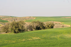 Gräsplanfält och Rolling Hills Arkivfoton