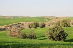 Gräsplanfält och Rolling Hills Arkivbild